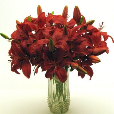 Red-Lilies